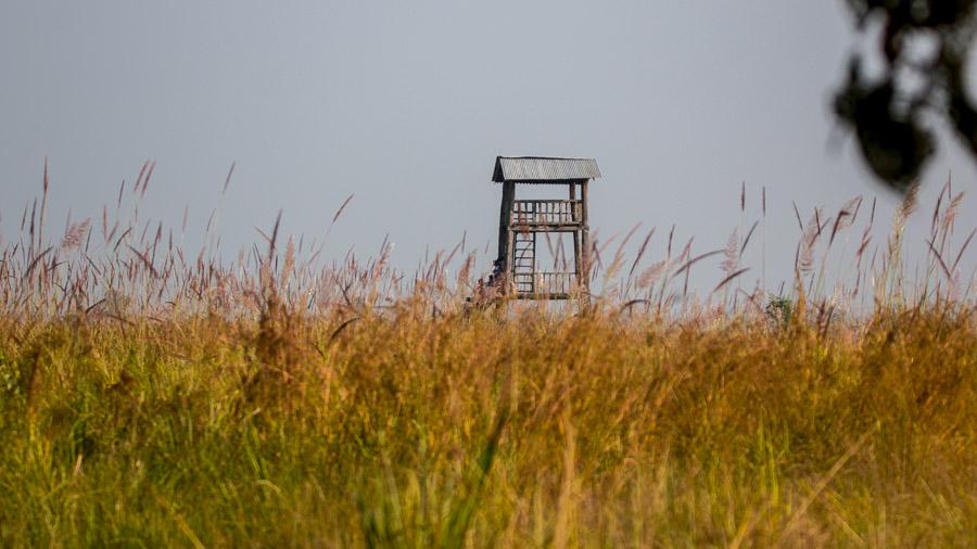 A Machan over the grasslands of Shuklaphanta National Park